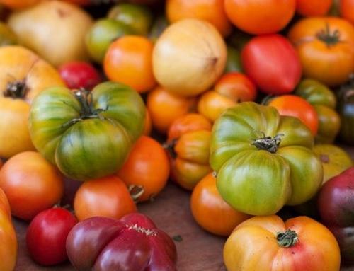 Tomato Checklist