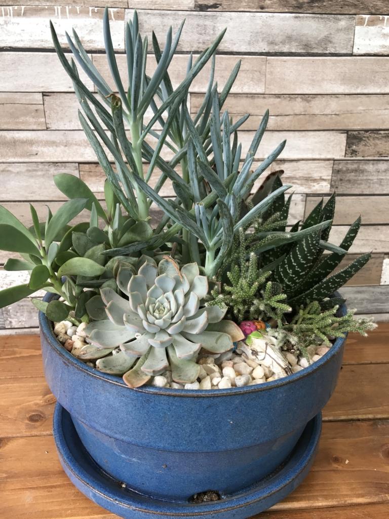 Gift Ideas - Atlantic Nursery & Garden Shop
